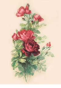 DECO AM 8805 rose rosse